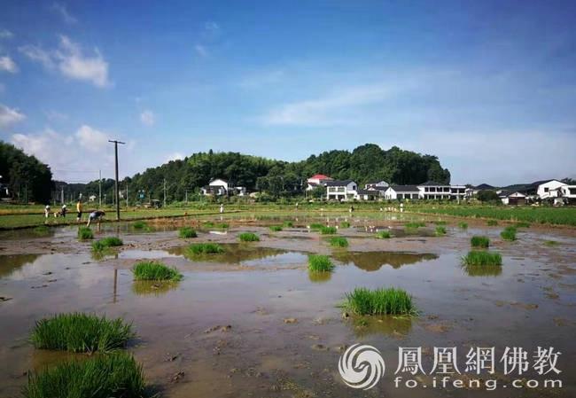 九溪古寺农禅园(图片来源:凤凰网佛教 摄影:湖南省佛教协会)