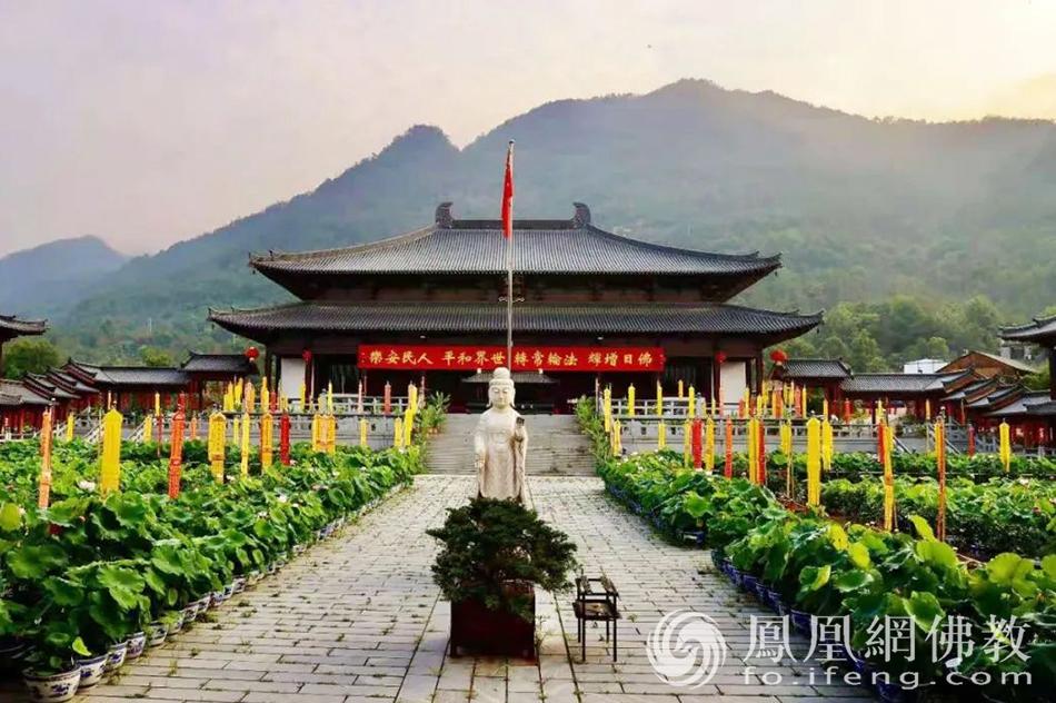 天台山护国寺荷花盆景(图片来源:凤凰网佛教 摄影:许斌)