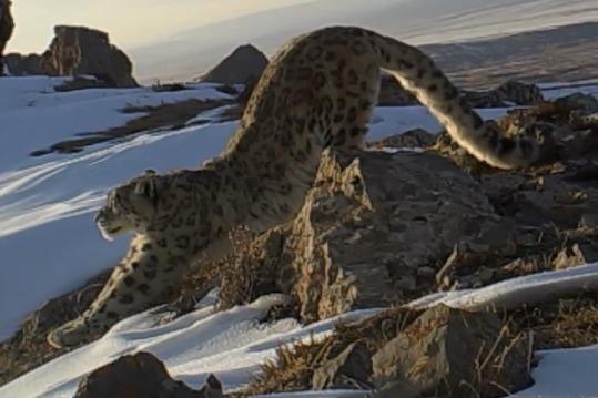 纪录片《祁连山国家公园》:兽类 何以为家